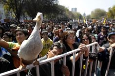 I love the Protest Duck!