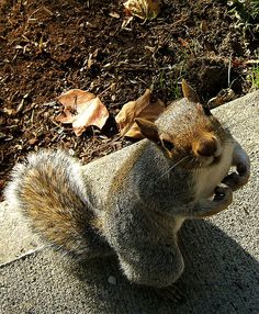 I've already found all of the nuts & acorns I hid for the winter....I'm ready for Spring & all those tasty new plant roots & seeds! = )