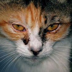 "@shoji_ogawa_unlimited's photo: ""#釜ヶ崎 #cat #kamagasaki"""