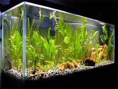 How to Set up a Freshwater Aquarium (Fish Tank) (BEGINNER ARTICLES)