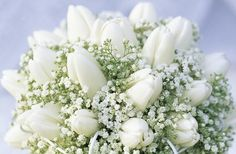 white tulips with babys breath