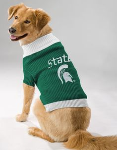 Michigan State Spartans Dog Sweater - I don't think my husband would let me get one for our dog, though :(
