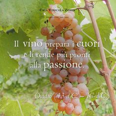 #winequotes #zoninquotes #ovidio