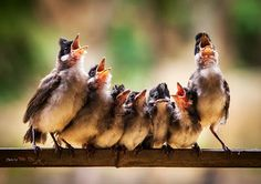 Wonderful Bird Choir via Content in a Cottage