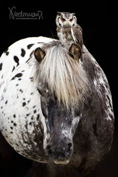 Funny Horse Pictures, Beautiful Horse Pictures, Beautiful Horses, Animals Beautiful, Animal Pictures, Majestic Horse, All The Pretty Horses, Equine Photography, Beautiful Creatures