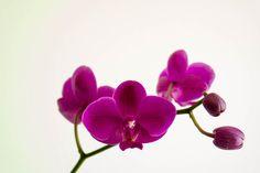 Test - Flower