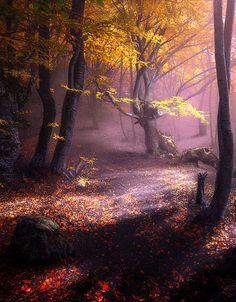 """lori-rocks: """" Autumn forest. Demerdzhi… by Ilya Melikhov """""""