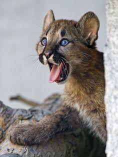 Funny yawning Marlon