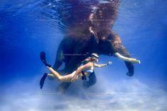 Swimming Elephants at the Andaman Islands - India