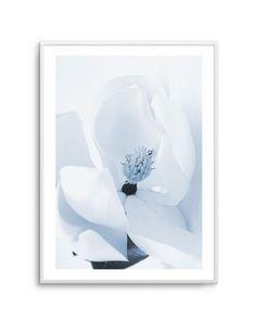 My Wishlist - Olive et Oriel Wall Decor Online, Black And White Artwork, Online Posters, Australian Art, Botanical Flowers, Magnolias, Poster Prints, Art Prints, Blue Tones