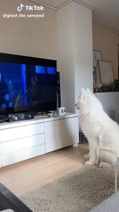 What does Zootopia do to my dog. What does Zootopia do to my dog.,Cute Dogs tv Related OFF Portable Kids & Pets Safety Door GuardYour place to. Animal Jokes, Funny Animal Memes, Dog Memes, Funny Animal Pictures, Dog Humor, Cats Humor, Sports Pictures, Funny Humor, Funny Images