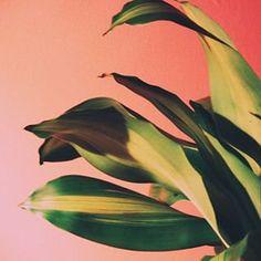 #plantsonpink by @oliviaswilson