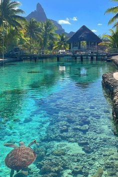 Need A Vacation, Vacation Places, Dream Vacations, Vacation Spots, Pacific Destinations, Marquise, Scenic Photography, Paradise Island, Beautiful Places To Travel