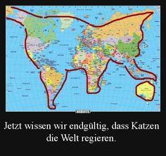 Jetzt wissen wir endgültig, dass Katzen die Welt regieren.   Lustige Bilder, Sprüche, Witze, echt lustig