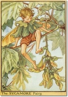 Cicely Mary Barker - Fairies of the Trees - The Sycamore Fairy Archival Fine Art Paper Print