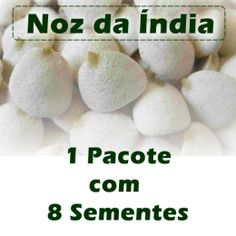 Noz da Índia - 1 pacote com 8 Sementes