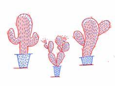 Cacti Study