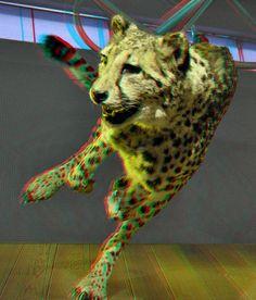 Cheetah Naturalis 3D