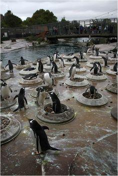 Penguin Colony at the Edinburgh Zoo
