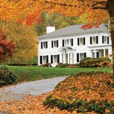 This Old House: 10 Best Trees and Shrubs for Fall Color This Old House, Small Yellow Flowers, Trees And Shrubs, Autumn Trees, Autumn Leaves, Red Leaves, Autumn Scenery, Autumn Home, Cozy House