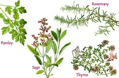 Parsley, Sage, Rosemary and Thyme - English Children's Songs ...