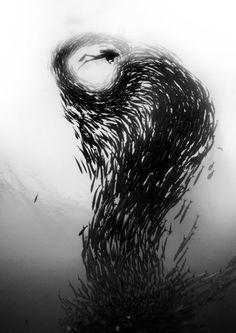 Impresionante Fotografía Submarina   Undermatic