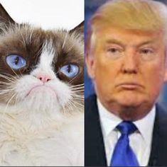 32 Trendy Ideas For Memes Faces Enojado Grumpy Cat Quotes, Grumpy Cat Humor, Cat Memes, Funny Animal Memes, Funny Cats, Funny Memes, Jokes, Animal Pictures, Funny Pictures