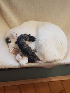Circles, Dog Cat, Cats, Animals, Gatos, Animais, Animales, Kitty Cats, Animaux