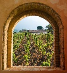 arched window on the vineyar via MuralsYourWay.com