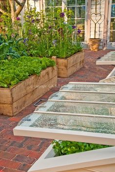 raised beds and cold frame vegetable gardens- on pavers, saves you from mowing between them