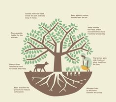Agroforestry - how it works