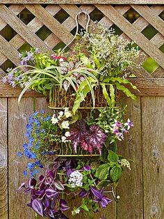 Garden Showers, shower caddy turned flower planter