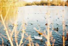 sunset by Ella-Ruth McQuoid-Taylor on 500px lomography film colour expired 35mm analog vintage ducks animals landscape