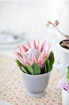 Containers for Displaying Flowers protea - very cute.protea - very cute. Protea Centerpiece, Centerpieces, Protea Wedding, Wedding Flowers, Bride Flowers, Green Wedding, Deco Floral, Southern Weddings, Wedding Planning Tips