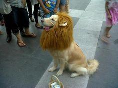 trust me, im a lion