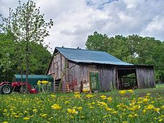 love this old barn with the field of wild flowers