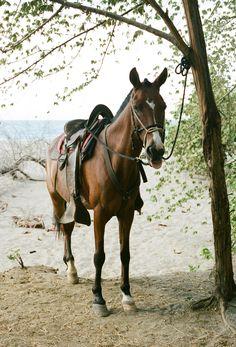 horseback riding in Guanacaste, Costa Rica / photo by melissaenidphotography.com