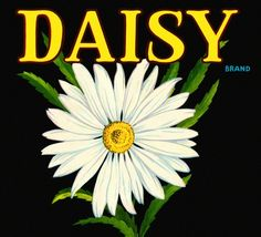 Daisy...reminds me of my sweet daughter....