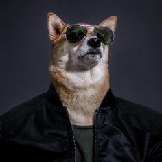 #Bodhi, the #Shiba Inu behind the beloved blog #Menswear Dog, is here to show you how to dress like a man. Organized seasonally, The New Classics highlights the timeless, can't-go-wrong items every man needs in his wardrobe—from a chambray shirt to a perfectly fitted peacoat (all modeled by #Bodhi, of course)—and shows how to mix and match them all year long.