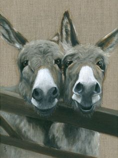 Two Donkeys  Visit our page here: http://what-do-animals-eat.com/donkeys/