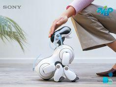Sony AIBO.