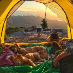 Camping with dogs. Tent camping. Room with a view.