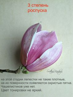 Paper Flowers Craft, Clay Flowers, Flower Crafts, Magnolia, Color, Pastel, Flowering Trees, Cake, Magnolias