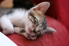 The purrfect dreams |