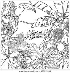 Tropical wild birds and flowers and space for text. Coloring book for adult and older children. Animal Line Drawings, Outline Drawings, Cute Coloring Pages, Coloring Books, Adult Coloring, Flower Outline, Flower Art, Floral Illustrations, Illustration Art