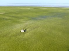 #5. グリーン・サンド・ビーチ / 米ハワイ島カウ地区 世界で最も変わったビーチ15選。#6なんて、ここ本当に地球!?