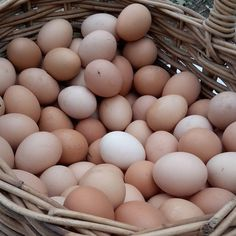 Coming soon Free Range Eggs in our shop. #freerange #eggs #wallington #bellarinepeninsula #victoria #oceangrove #geelong by lomas_orchards http://ift.tt/1JO3Y6G