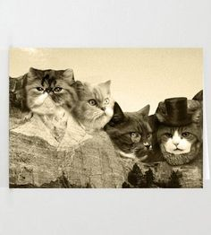 Meowmore Cards by Sharp Shirter on Scoutmob Shoppe