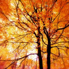 Nature Photography, Autumn, Forest, Fall,Trees, Orange, Fine Art print, Home Decor. on Etsy, $20.00