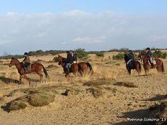 Loonse en Drunense duinen, Udenhout